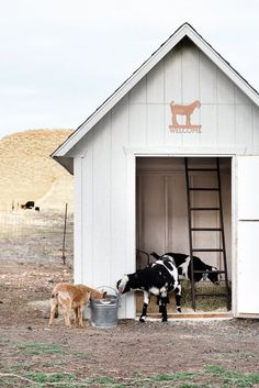 One of the many questions I receive about raising goats and keeping goats as pets is: How do you keep the goat barn clean? Today I am going to share how I keep our goat barn clean and how we keep our pet goats healthy! Keeping Goats, Raising Goats, Goat Shed, Small Goat, Small Farm, Goat Shelter, Goat House, Goat Care, Large Dog Crate