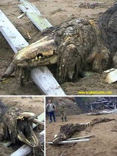 All Washed Up: 10 Bizarre Beached Creatures - WebEcoist