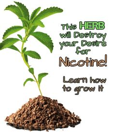It can be very hard to quit smoking and everybody knows is a harmful habit. You get your addiction from nicotine, the substance you find in the cigarettes. Physically, the symptom can last for a week, but the craving for nicotine can last longer.