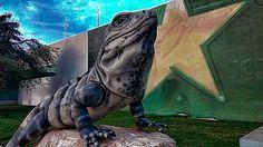 MERIDA YUCATAN MEXICO IGUANA (TOLOK IN THE MAYA LANGUAGE) Representative animal of Yucatan, this sculpture stands outside the airport in Merida.