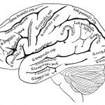 Image result for blank brain diagrams to fill in   School ...