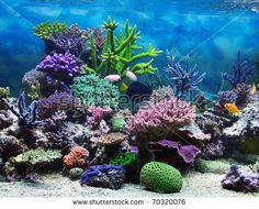 Image result for reef mobile