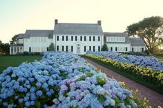 Cape Cod hydrangea house, Chatham MA Was called hydrangea walk. Hortensia Hydrangea, Hydrangea Care, Drought Resistant Plants, Up House, House Floor, Farm House, Cape Cod, My Dream Home, Curb Appeal
