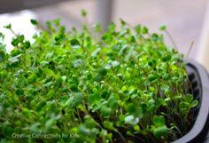 Let Us Plant Lettuce! Wonderful activity for spring- planting lettuce.