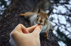 21-Year-Old Photographer Captures Enchanting Snapshots of Himself Feeding Wild Animals - My Modern Met