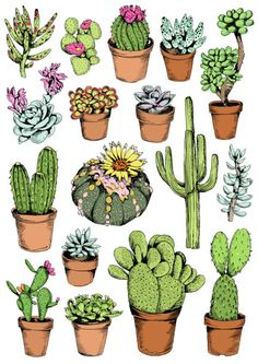 'Cacti' by May van Millingen 100%