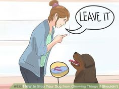 Image titled Stop Your Dog from Chewing Things it Shouldn't Step 12