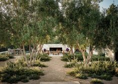 Image 10 of 16 from gallery of Tehama 1 House / Studio Schicketanz. Photograph by Joe Fletcher Outdoor Spaces, Outdoor Living, Olive Gardens, Home Studio, Garden Inspiration, Land Scape, Backyard Landscaping, The Great Outdoors, Outdoor Gardens