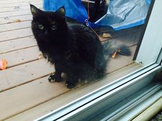 Found Cat - Unknown - Hamilton, ON, Canada L9C 6X4 on October 26, 2015 (13:00 PM)