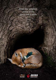 Why Vegan, Animal Cruelty, Animal Quotes, Animal Rights, Going Vegan, Sadie, Cruelty Free, Panther, Fur