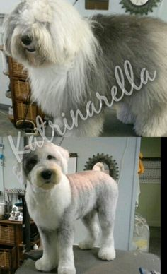 My groom of an old English sheepdog before and after ..took me almost 3 hours
