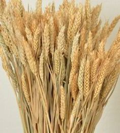 Naturally dried Rye stalks make a beautiful addition to summer flower bouquets and wedding decor. DriedDecor.com #rye #driedflowers #weddingflowers #weddingbouquet #centerpieces #summerdecor #homedecor