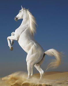 Koń - przyjaciel człowieka. | DinoAnimals.pl