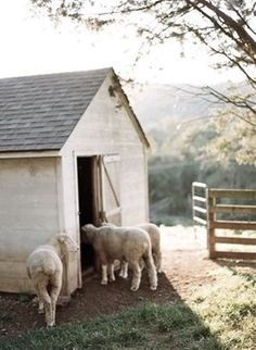 sheep// (This would be good for caption-making exercises: I see mischievous kids sneaking a smoke in the shed! Country Charm, Country Life, Country Girls, Country Living, Country Style, Country Roads, Country Farmhouse, French Country, Future Farms