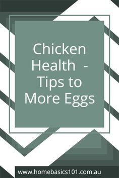 Enjoy more eggs by keeping your chooks happy and healthy with some very easy tips - head over the website for all the information Farm Fun, Farm Animals, Health Tips, Eggs, Chicken, Website, Friends, Healthy, Happy