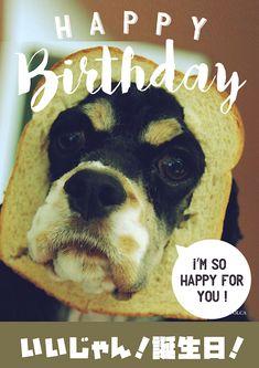 おバカ犬のお誕生日おもしろ画像 Cute Baby Animals, Funny Animals, Birthday Messages, Kawaii Art, Birthday Photos, I Am Happy, Happy Birthday, Teddy Bear, Pets