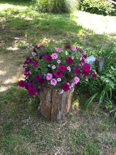 Hollow cedar log planted with petunias. Cedar Planters, Outdoor Planters, Garden Planters, Outdoor Gardens, Tree Stump Decor, Tree Stump Planter, Fairy Garden Plants, Garden Trees, Easy Garden