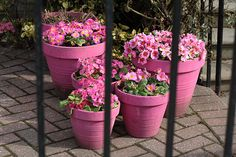 Pink pots &  Flowers!  Never thought of painting my clay pots bright colors!  Helloooo in there!!!