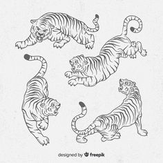 Collection of hand drawn tigers Free Vector Tattoo Sketches, Tattoo Drawings, Tattoo Flash, Simplistic Tattoos, Japanese Tattoo Art, Sewing Art, Vector Photo, Future Tattoos, Tattoo Designs