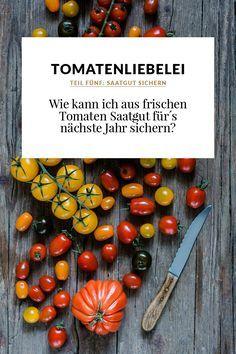 Saatgut aus frischen Tomaten sichern