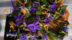 Salade de feuilles fraîches d'ail des ours avec pommes et carottes rappées.#Mahboob