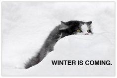 Wintercat