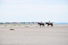 Le ballet des phoques, en Baie de Somme - My Sweet Escape