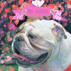 Love with Hank the Bulldog