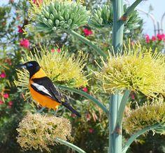 Los buenos amigos, son las aves que se posan y hacen nido, en nuestro árbol genealógico...  Letras en café ~Arely Huber  ©
