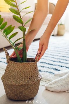 Looking for Instagram-worthy indoor plants for your home? Jazz up your home decor with air purifying indoor plants that are easy to care for and perfect for beginners! Indoor Plant Pots, Best Indoor Plants, Indoor Gardening, Best Air Purifying Plants, Orchid Varieties, Natural Air Purifier, Fiddle Leaf Fig Tree, Rubber Plant, House Plant Care