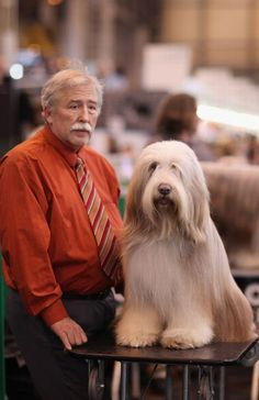 Dogs resembling their owners! Always a good laugh!