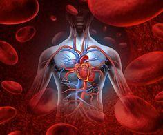 Jalur dari sirkulasi darah manusia yang mengalirkan oksigen