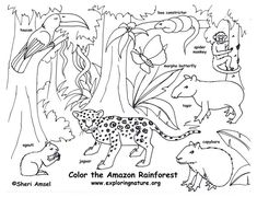 rainforest color pictures | Rainforest (Amazon) Coloring Page -- Exploring Nature Educational ...