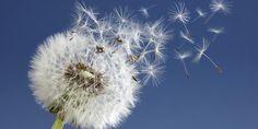Atención alérgicos al polen: la primavera que se avecina será tan intensa como la del año pasado