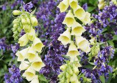 12 kukkapenkin parasta väriyhdistelmää   Meillä kotona