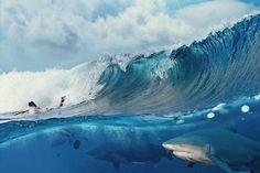 be94480e95b6 FYeah Sea Creatures! Sea Monsters