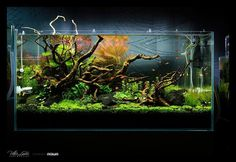 Aquascape by Victo Llantos for GreenAqua