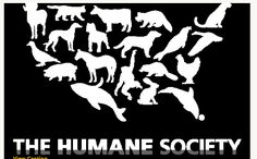"""http://www.humanesociety.org/ works in all 50 U.S. states and is considered """"the nation's largest and most effective #animal protection organization."""" They were founded in 1954 in Washington, D.C.  They focus on celebrating #animals and confront animal cruelty.  Shopforpaws.com supports all their efforts in protecting animals in need.  #dogs #cats #pets"""