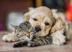 Pillow by Peterech1 #animals #pets #fadighanemmd