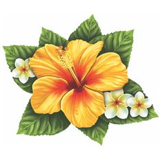 Single Hibiscus Flower Porcelain Swimming Pool Mosaic Single Hibiscus Flower The post Single Hibiscus Flower Porcelain Swimming Pool Mosaic appeared first on Diy Flowers. Hawaiian Flower Tattoos, Hibiscus Flower Tattoos, Hawaiian Flowers, Hibiscus Flowers, Tropical Flowers, Hibiscus Flower Drawing, Lilies Flowers, Yellow Hibiscus, Draw Flowers