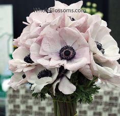 These are just about perfect. Light pink anemones, $280 for 200 stems (which isn't horrible for wedding flowers), and available in the spring.