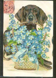GE168-CHIEN-DOG-CORBEILLE-de-MYOSOTIS-FANTAISIE-Belle-LITHO