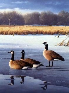 Artist Daniel Smith Unframed Canadian Geese Print Evening Trio   WildlifePrints.com