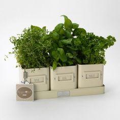 Cream Enamel Kitchen Herb Pots and Storage Tray