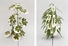 Ilona Plaum. Papercut 1 & 2 2008