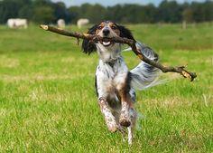 10 Fun Ways to Exercise Your Dog: Animal Planet