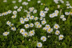Rid Your Lawn Of Pesky Weeds Lawn and garden weeds are a pesky task to conquer, even for the most se Grass Weeds, Weeds In Lawn, Garden Weeds, Garden Soil, Lawn And Garden, Gardening, Organic Weed Control, Lawn Mower, Plants