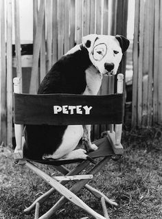 Petey from the Little Rascals...everybody claimed Petey who went everywhere with them.
