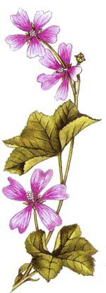 Operagastro > Ricette coi fiori: Pasta con fiori di rucola.