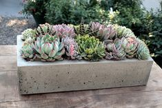 Wonderful mix with striped Aloes slipped in